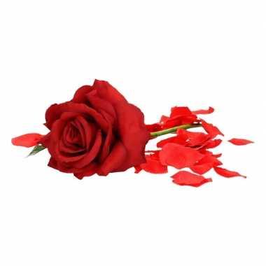 Valentijnskado rode roos 31 cm met rozenblaadjes