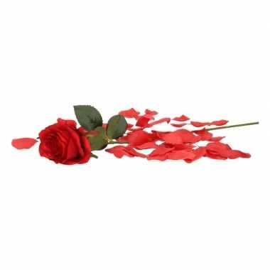 Valentijnskado rode roos 45 cm met rozenblaadjes
